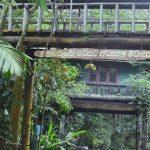 Dunumadalawa Forest Reserve