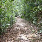 Kottawa Conservation Forest