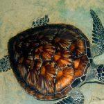Mahamodara Sea Turtle Hatchery