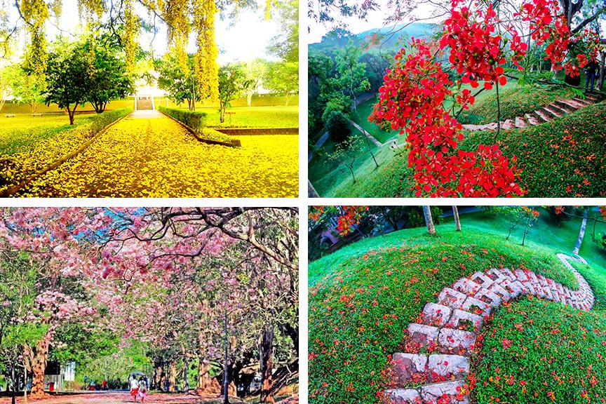 University of Peradeniya - Attractions in Sri lanka