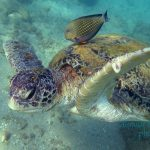 Sea Turtle Hatchery & Rescue Centre