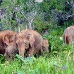 Hurulu Eco National Park