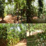 Regent Spice & Herbal Garden