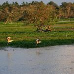 Anawilundawa Bird Sanctuary