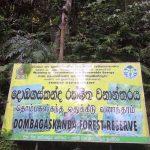 Bodhinagala Forest Reserve